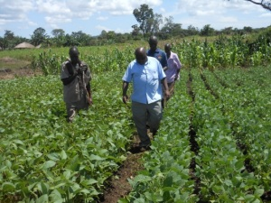 LSB seed inspection by Abi ZARDI director. Curtsey Francis Okot.ISSD Uganda